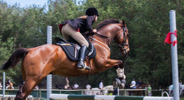 Wyposazenie Dla Jezdzca I Konia Podstawowe Informacje Dobre I Najlepsze